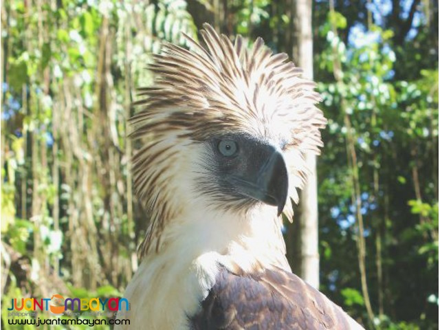 Davao tour packages to Davao Tourist Spots