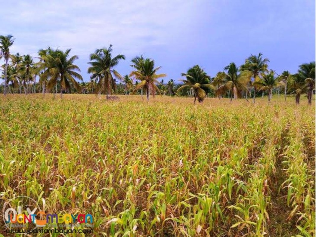 2.2 hectare Poultry Lot in Cebu City