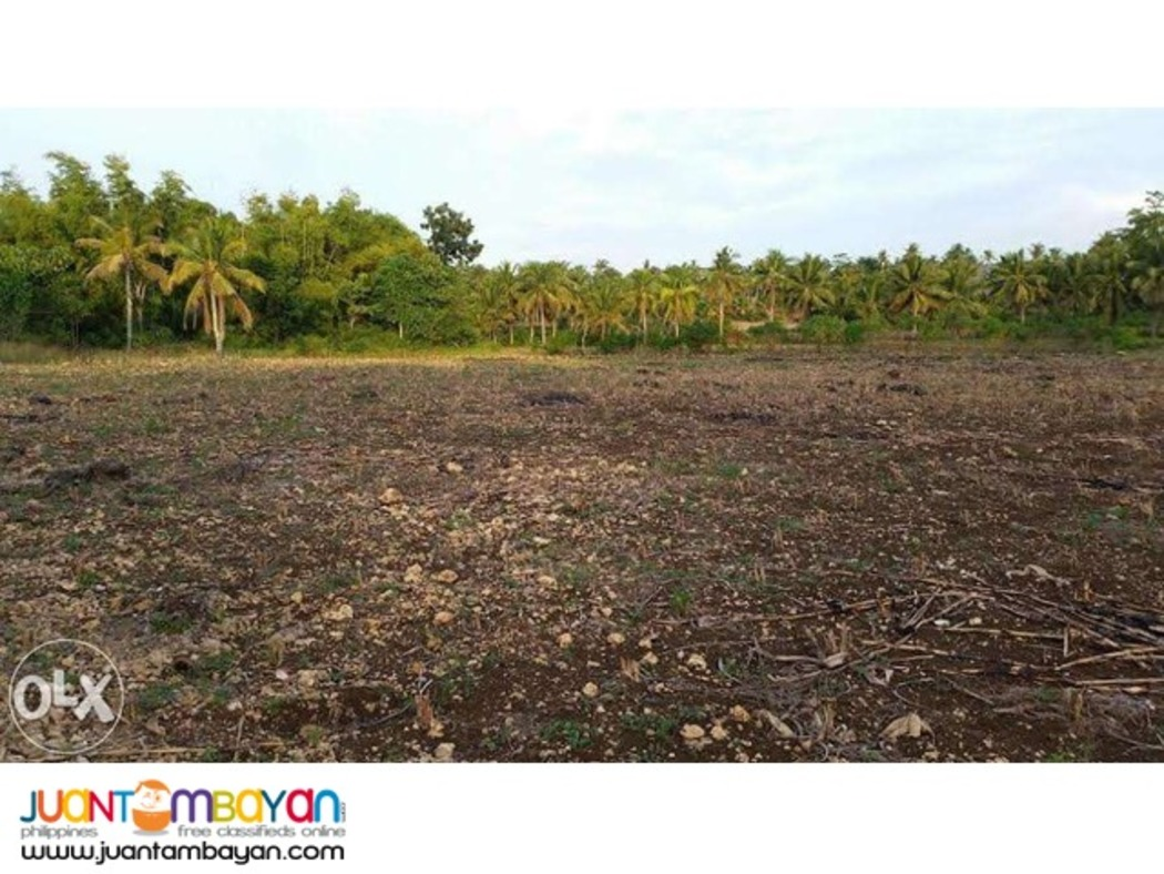 2.4hectare Poultry Lot in Cebu City