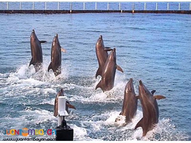 Subic tour package, overnight + Zoobic Safari, Ocean Adventure