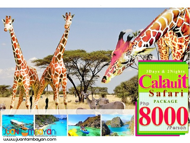 Experience the African wildlife @ Calauit Safari