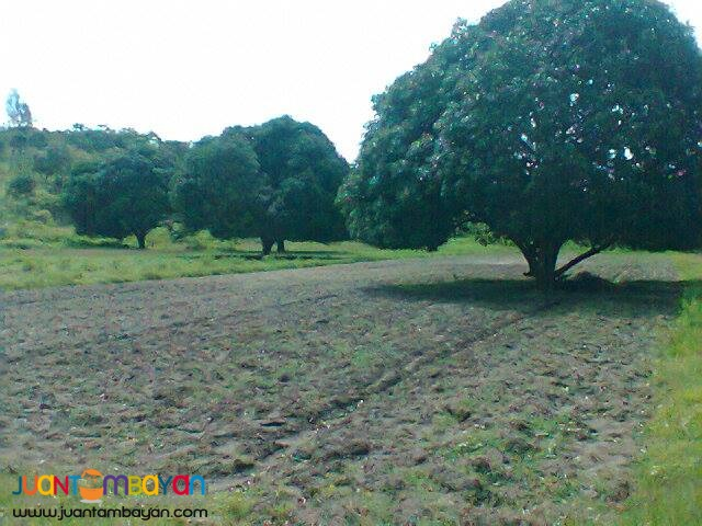 FARM LOT IN ZAMBALES FOR RENT or sale