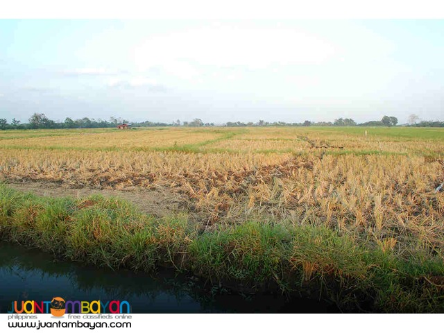 Agricultural Land 3 hectares 2.2M For Sale
