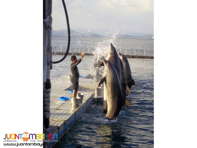 Subic tour package, the perfect nature and animal adventure