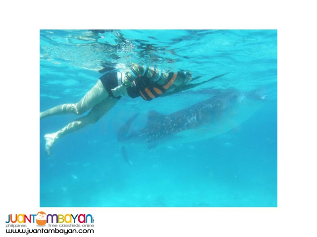 Cebu tour package with whale watching in Oslob