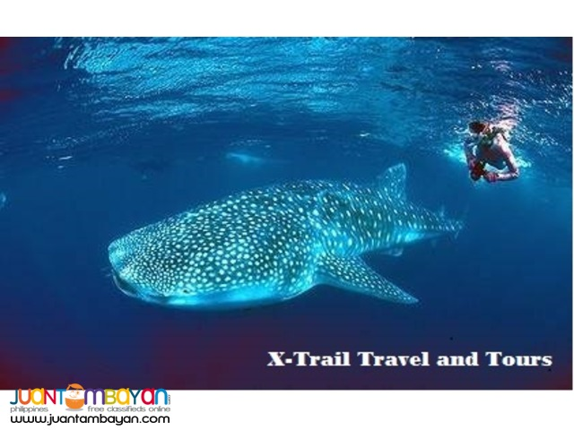 3D / 2N Oslob Whale Shark Watching Tour Package