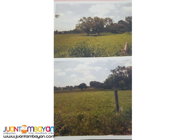 300 Hectares Lot For Sale