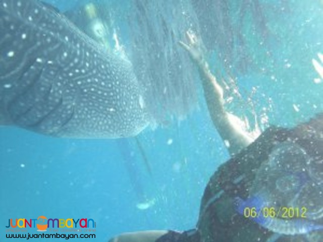 Cebu tour package, shark watching almost guaranteed
