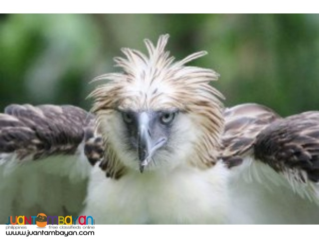 Home to Philippine Eagle Center, Davao tour package