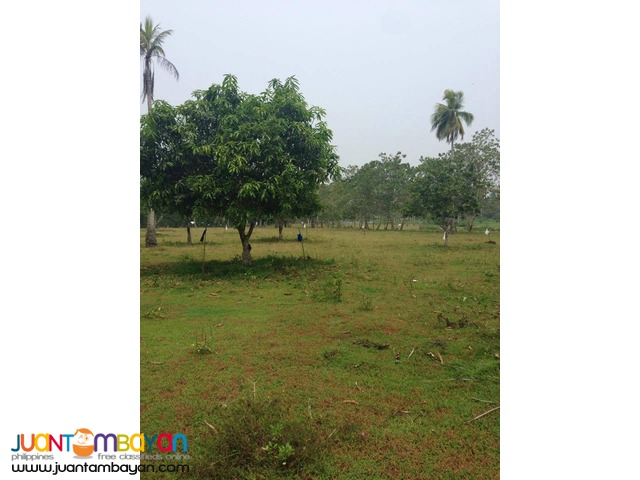 FOR  SALE SAMAL RESIDENTIAL LOTS 150SQ.M FOR INSTALLMENT