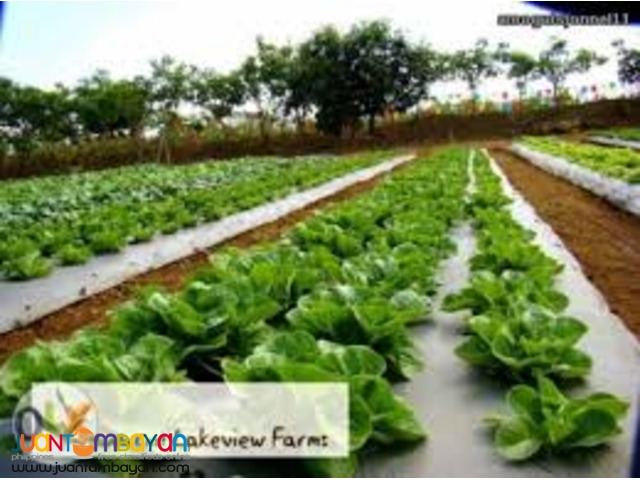 Manila East Lakeview Farms Morong Rizal Vacation/Farm Lots