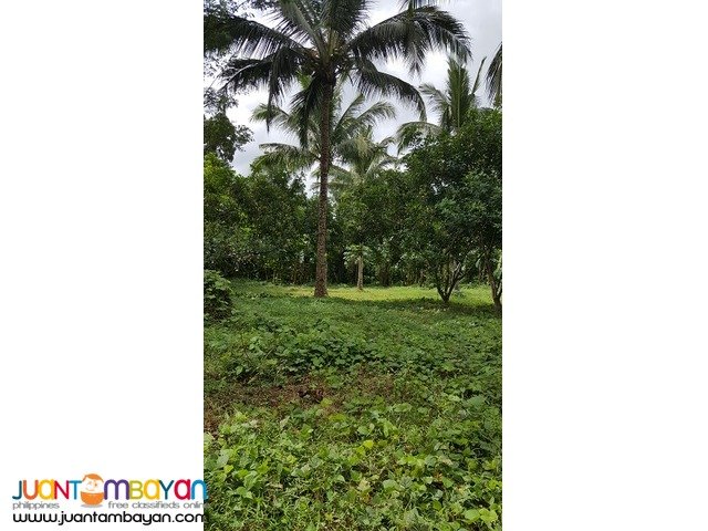 Farm Lot for Sale in Malvar, Batangas City