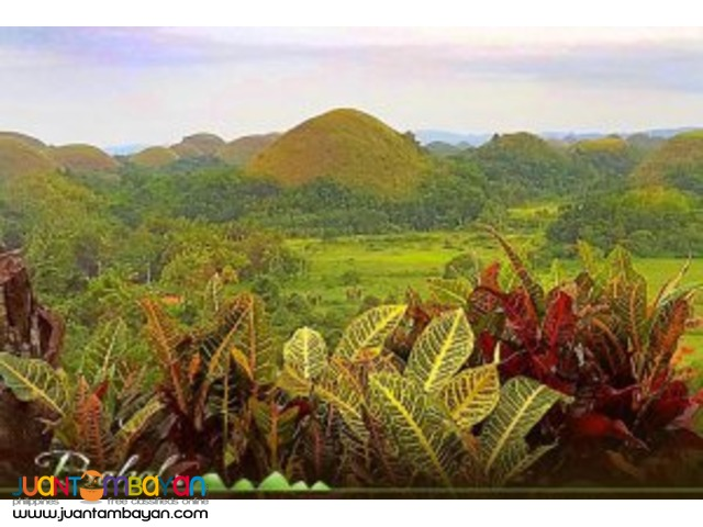 Chocolate Hills, is Bohol's greatest pride in Bohol tour package