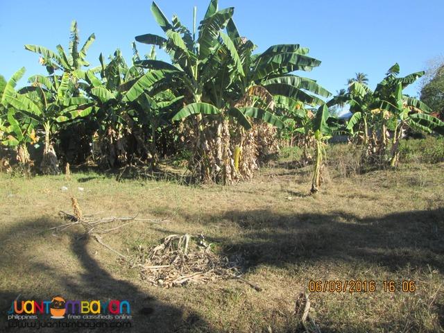 Lot for Sale in Batinguel, Dumaguete City, 5600 sqm., Clean Title