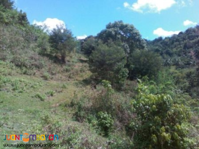 Cebu City subdivision lot only P4,080 a month