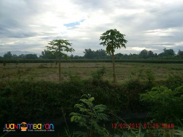 farm in PANGASINAN