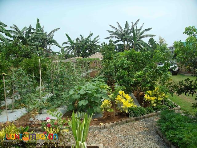 FarmVacation Lots at Manila East Lakeview Farms Morong Rizal