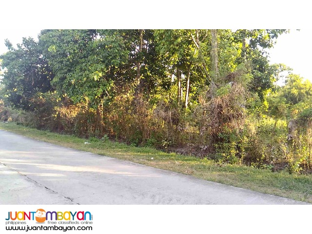 Farm Lot 650 per sqm at Amadeo Cavite 7.3 Hectares