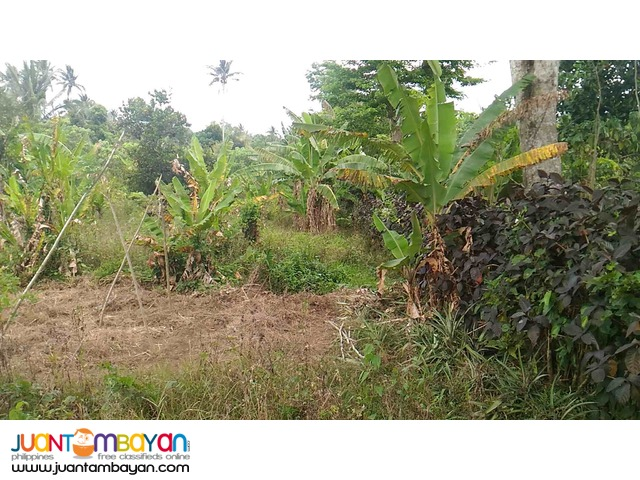 Mendez Cavite lot for sale along cemented road
