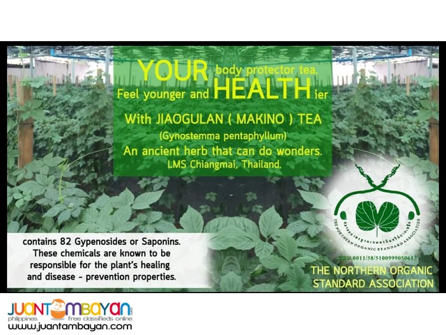 Jiaogulan Tea and Capsules (Five Leaf Co. Ltd. - Chiangmai, Thailand)
