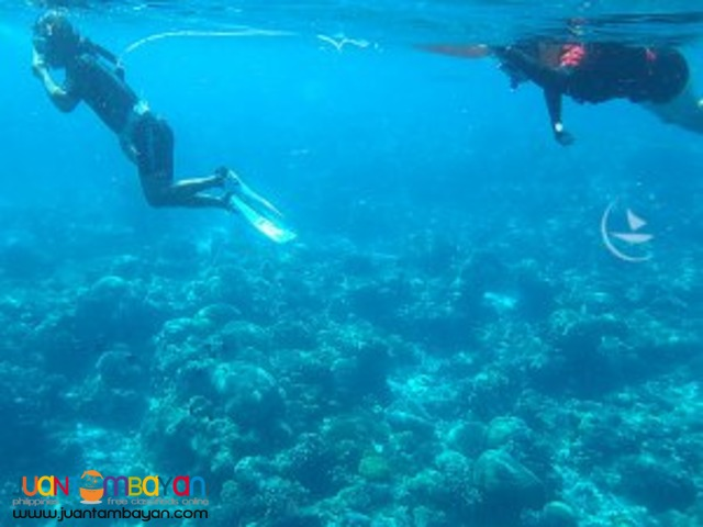 Indescribable reef, Bohol tour package