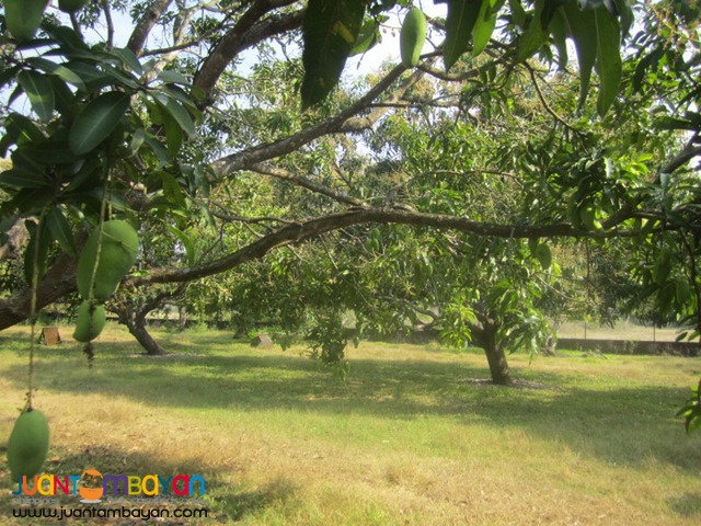 House and Lot for Sale with Mango Farm