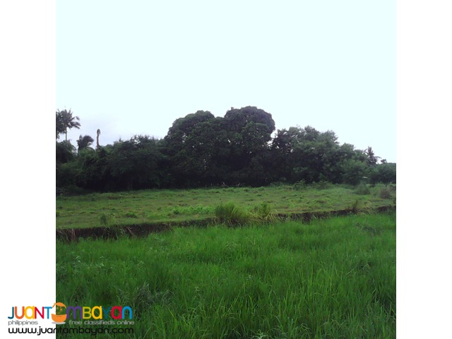 Farm lot for sale at Tanza Cavite 4.6 hectares 700 per square meter