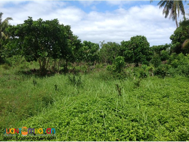 Lot For Sale At INFANTA Quezon Beach Resort