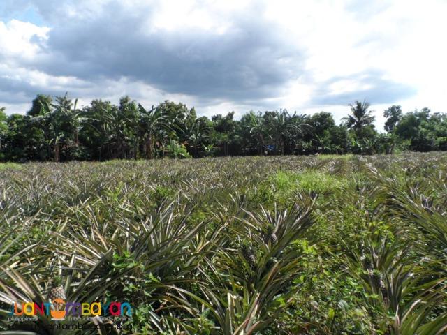 Agriland in Bo. Del Remedio, San Pablo City
