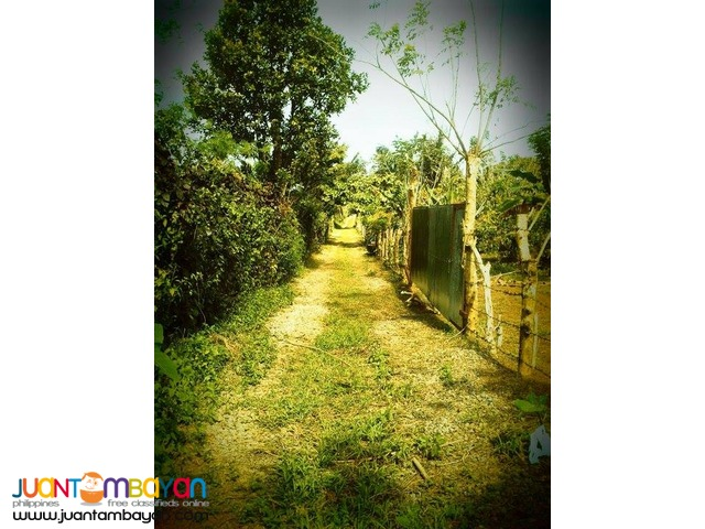Agricultural / Residential Lot in Barangay Talon, Amadeo, Cavite