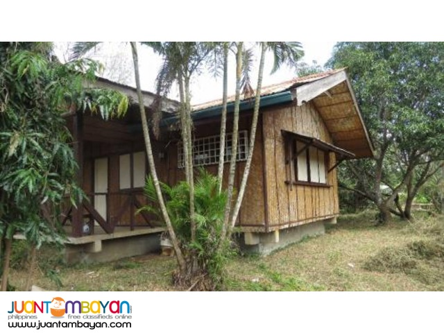 12196sqm mango farm for 7.5M