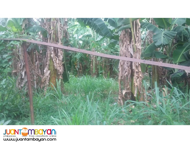 Slex 6 hectares vacant land for sale 90M