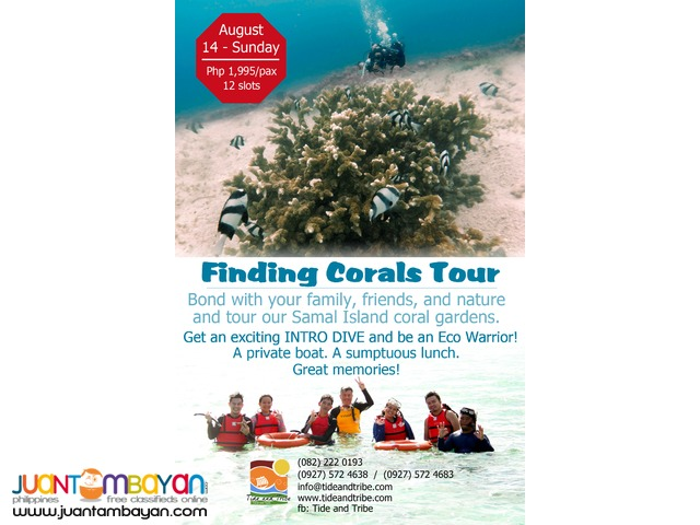 Finding Corals - August 14