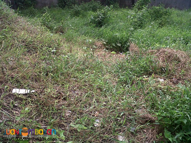 Lot for Sale at Multinational Village Paranaque City