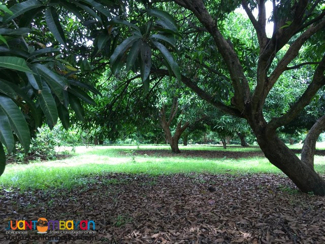 Beautiful farm land for sale in Morong, Bataan