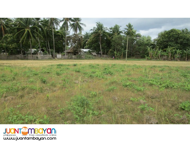 Ricefield for Sale in Siaton, 4374 sqm.