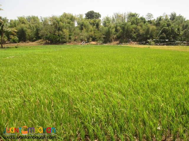 Ricefield for Sale in Siaton, 1.2 Hectare plus, (Helping a Relative)