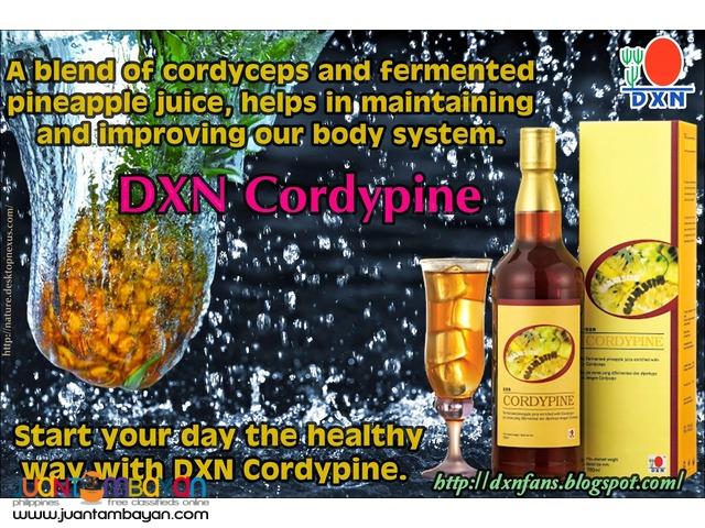 dxn cordypine; best for digestion