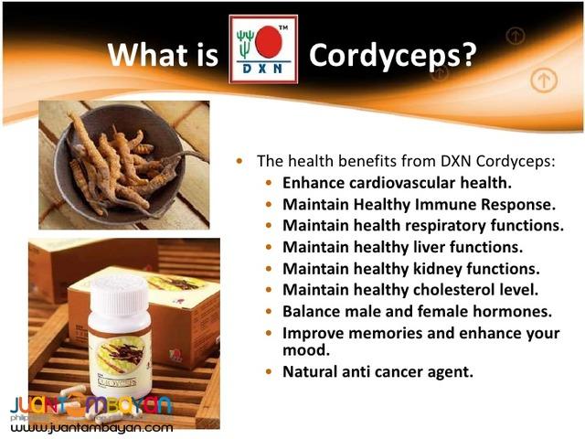 dxn cordyceps; bset for liver problem