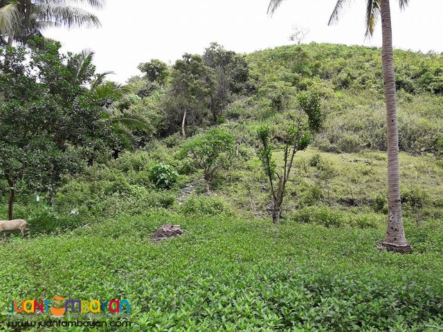 Affordable Lot Installment for sale in Cebu