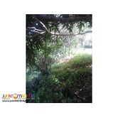 commercial lot in marcos hiway, sampaloc, tanay, rizal