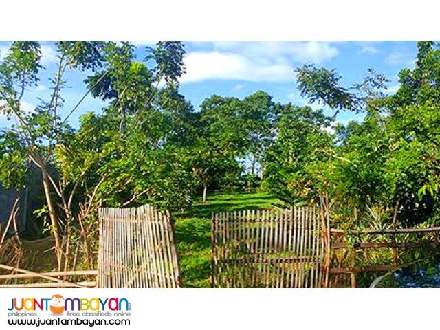 For Sale - Farm Lot BAMBU 1 | Morong | Arnel O  Cruzado