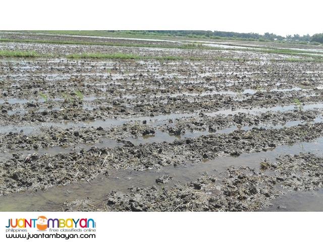 AGRI LOT FOR SALE (CATABLAN, URDANETA CITY, PANGASINAN