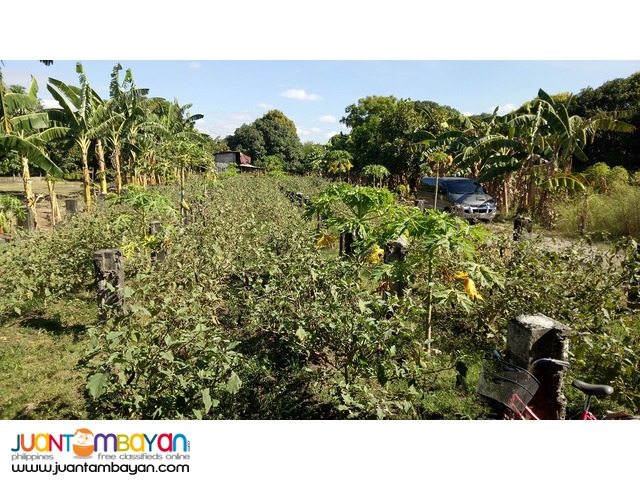 1.25-hectare farm with piggery in Lubao, Pampanga. NEGOTIABLE.