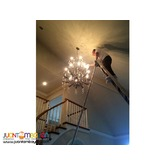 Chandelier Cleaning, Sealing and Glass Tinting Services