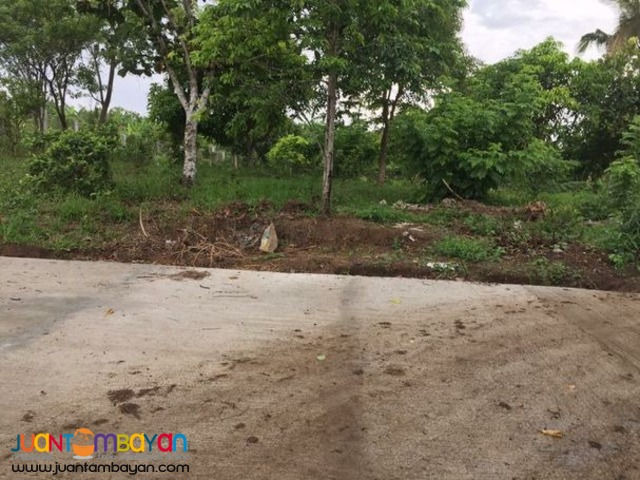 Farm lot at Amadeo FOR SALE!