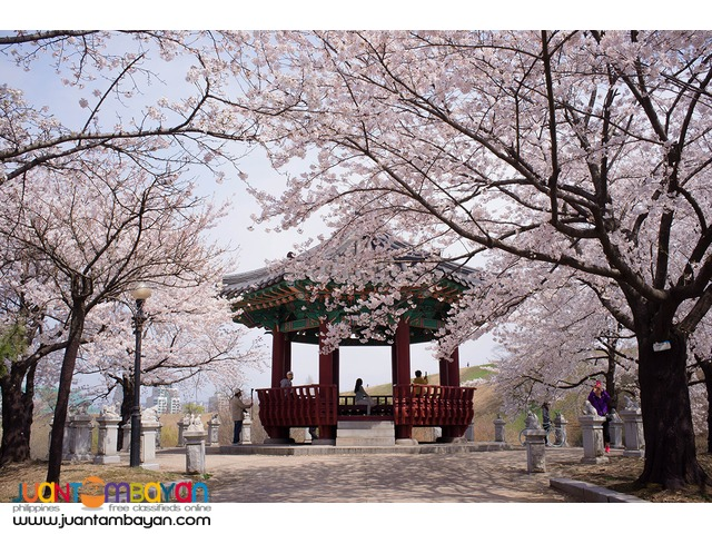 5D4N Korea Cherry Blossoms Tour Package + Visa + Airfare
