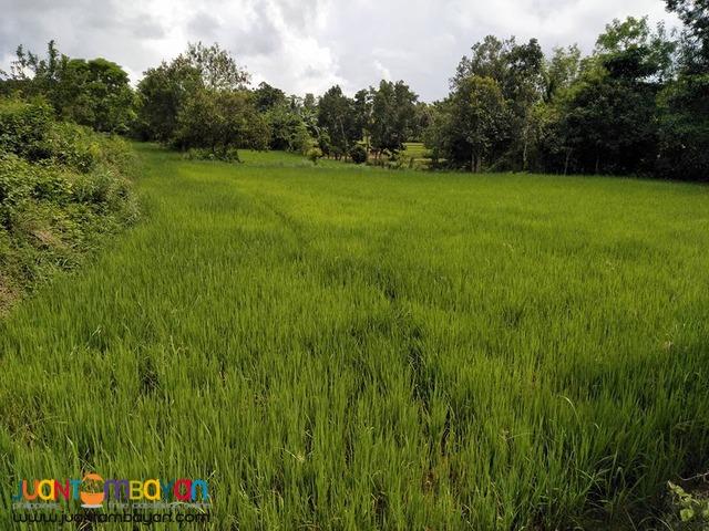 84000 sqm Nueva valencia Guimaras property