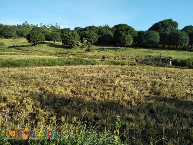 50000 sqm Mango Farm Guimaras Property