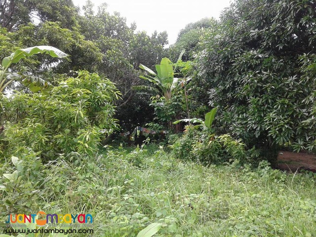 20000 sqm Mango Farm Guimaras Property